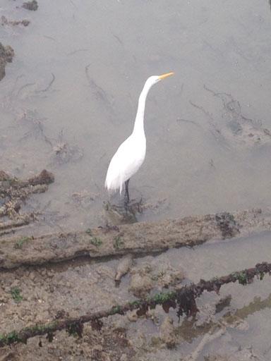 ゲシュタルト療法のワークショップで訪れたサンフランシスコの水鳥